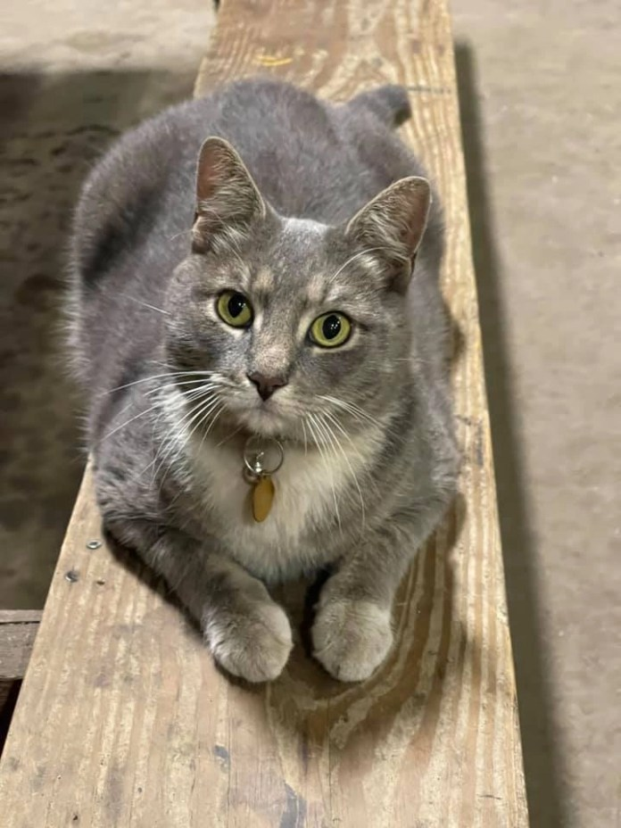 Little known cat themed stops in Connecticut include Turbo the Railway Cat