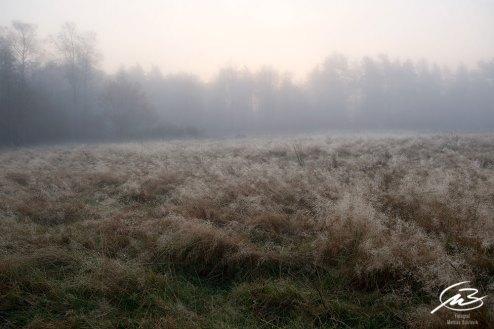 Vilken underbar morgon | Fotograf Borås: Mattias Björlevik