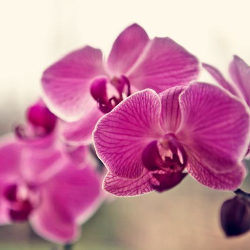 Orchidé | Fotograf Borås: Mattias Björlevik