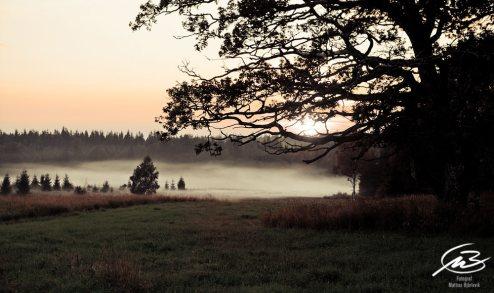 Solnedgång med dimma i sänkan och eken i förgrunden Fotograf: Mattias Björlevik