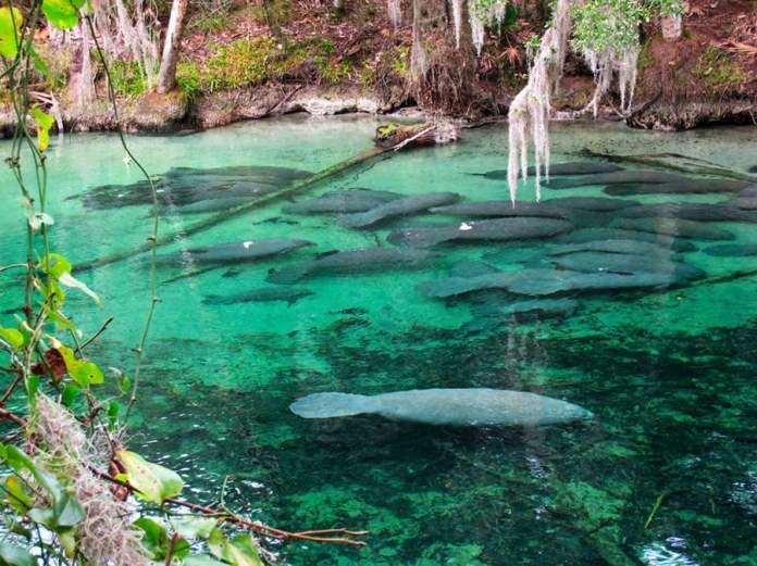 Resultado de imagem para Orlando state park