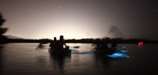 Florida Bioluminescence Kayaking and Ecotours