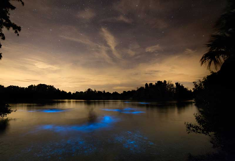 Merritt Island Fl Bioluminescence