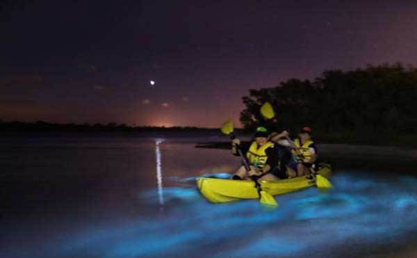 Bioluminescent Kayaking Florida BK Adventure