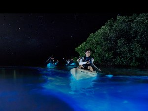 Florida bioluminescent kayaking tour