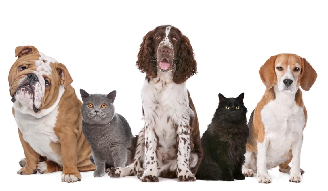 Pet Allergies: Pet Allergy Shots in Washington, DC