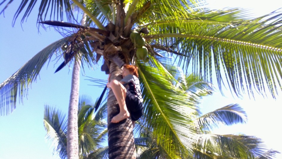 Waylon climbs a coconut tree in Rincon, Puerto Rico to retrieve the fruit