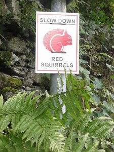 We honestly saw real red squirrels but they were too quick to photograph
