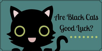Are Black Cats Good Luck