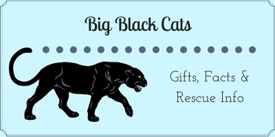 Big Black Cats Collection_FI