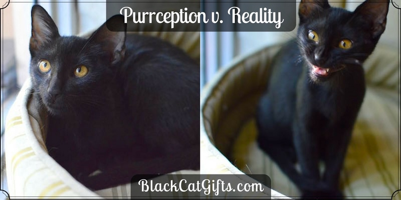 Purrception v Reality Leering