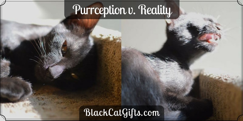 Purrception v Reality Sneeze