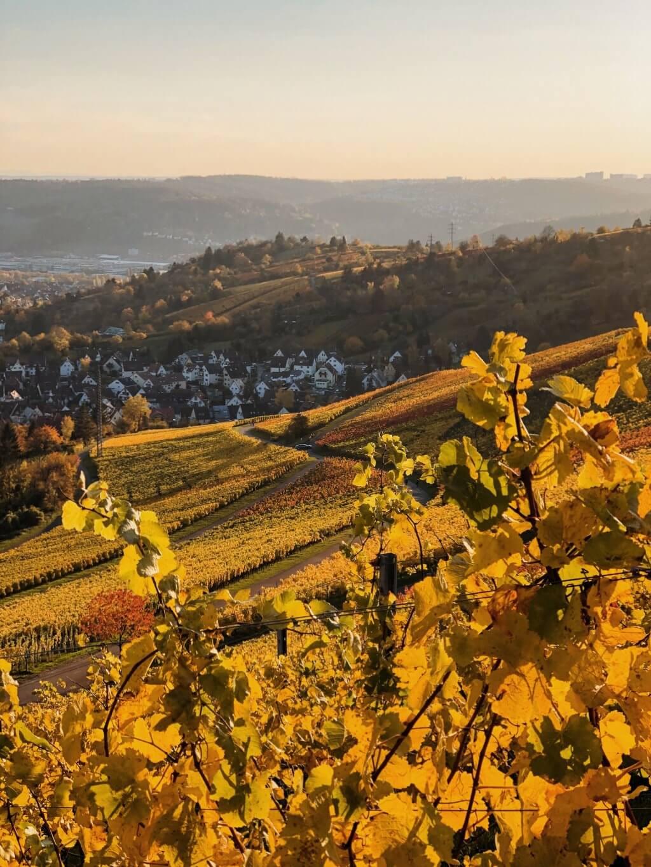Rotenberg wijngaarden herfst