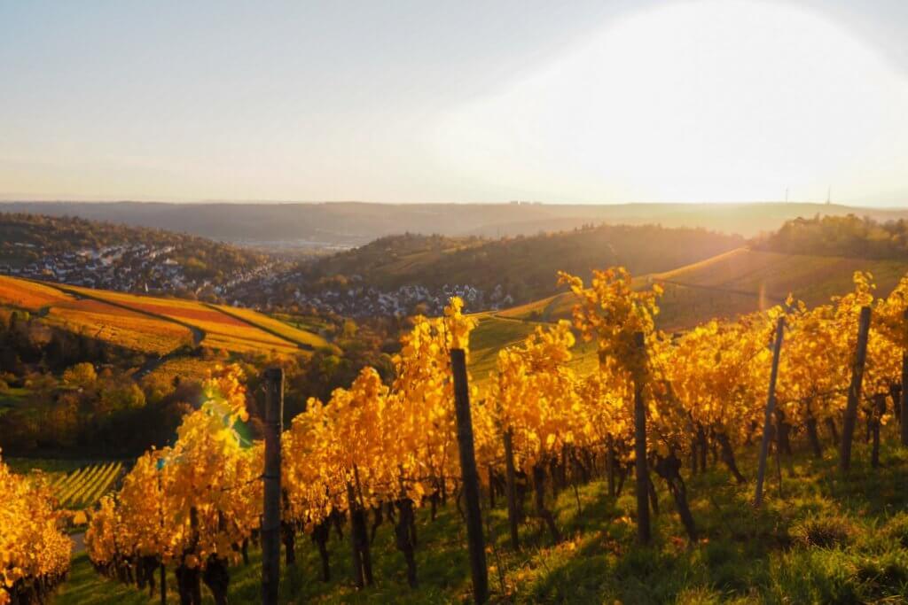 Wijngaarden Stuttgart Rotenberg