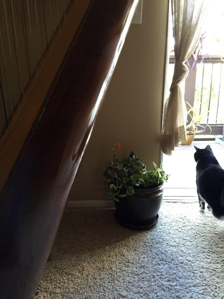 Plant Mama Rashida Shares How Her Garden Keeps Her Grounded