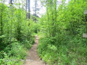 The trail up Crow Peak, Spearfish, SD