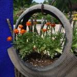 Flower 1-inBloom-0043