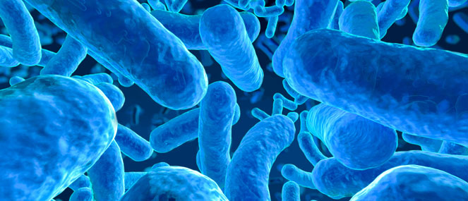 Probiotics What Is The Gut Microbiome Blackmores