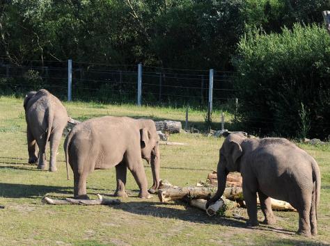 Blackpool Zoo's elephants