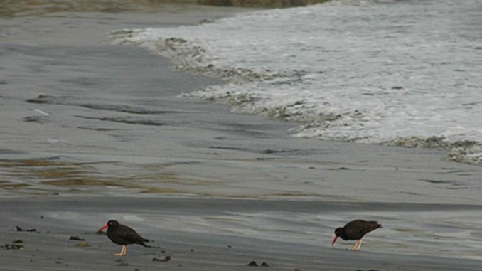 Garth's Beach, California (coastal.ca.gov)