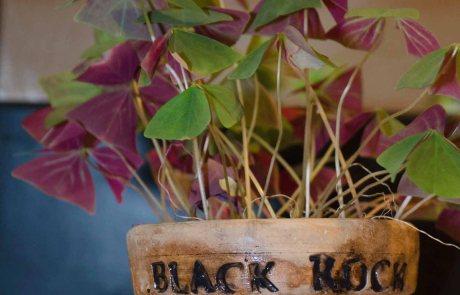 Black Rock Studio Plant