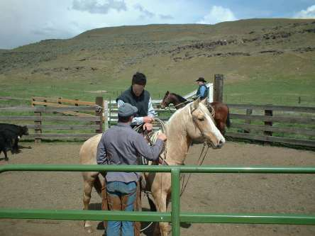 "Will coaches Dave on how to get his Palomino ""DUCATI"" calmed down and working!"