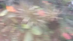 megaJakarta 1, from camera