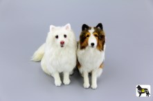 Yuki and Lexi de Japanese Spitz and Shetland Sheepdog