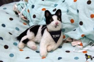 Tony de Cat