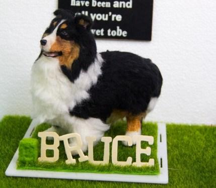Bruce de Shetland Sheepdog