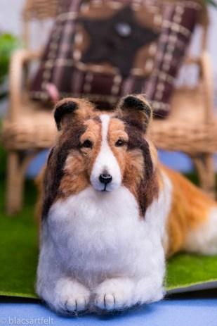 Max de Shetland Sheepdog