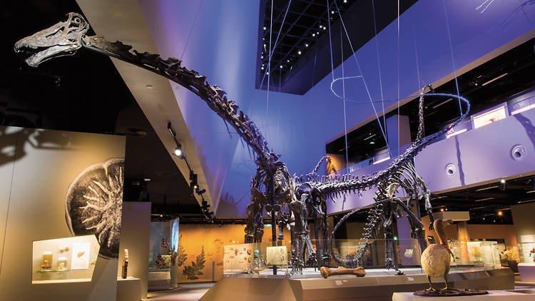 Lee Kong Chian Natural History Museum, Singapura