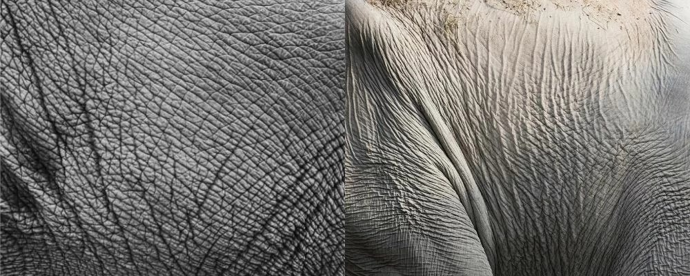 kerutan pada kulit gajah afrika dan asia