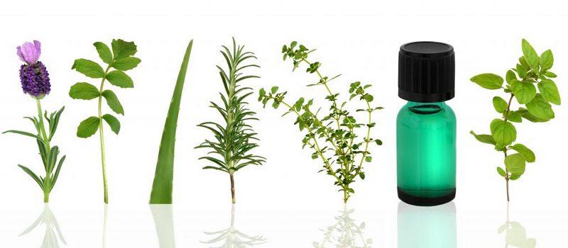 berbagai jenis tumbuhan yang bisa dijadikan essential oil