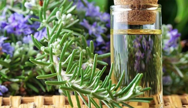 rosmarin dan rosemary essential oil