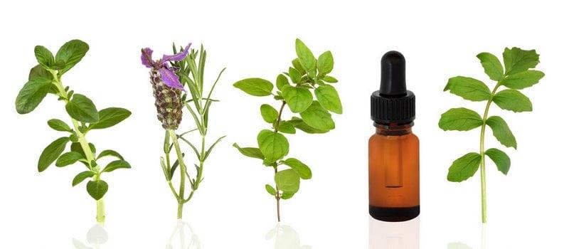 jenis tumbuhan yang bisa dijadikan essential oil