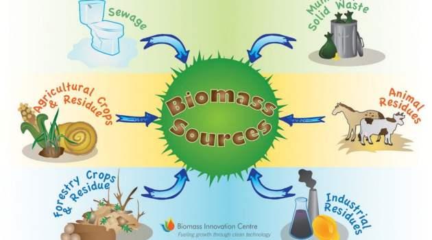 contoh sumber energi biomassa