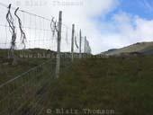 fence-heather