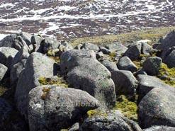 Snow Ridge 3