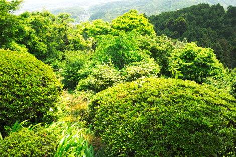 Nishiyama 6 (www.blairthomson.com)