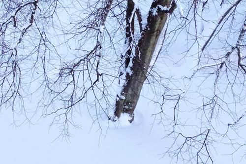 snowy-photo