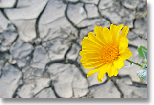 Flower growing in a dry river bed of cracked clay