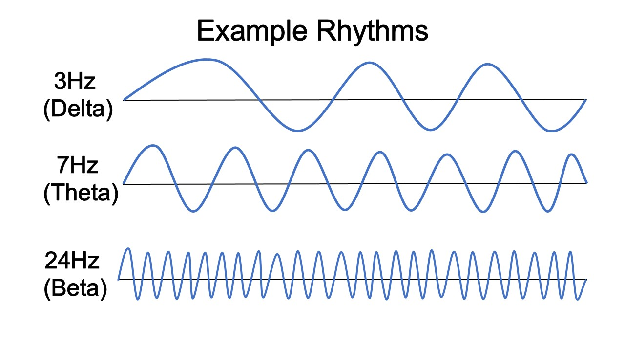 Rhythms and the Coordination of Units – Dr. Blake Porter