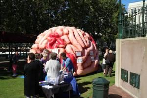 Blake Porter Neuroscience BHRC outreach brain week 2016