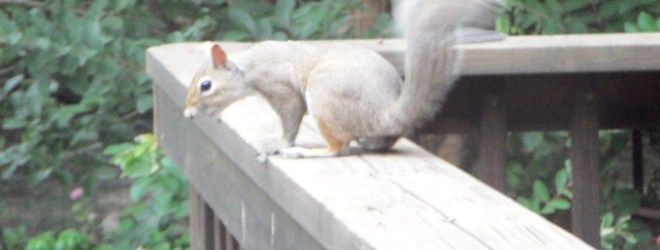 Determination, Your Name Is Squirrel