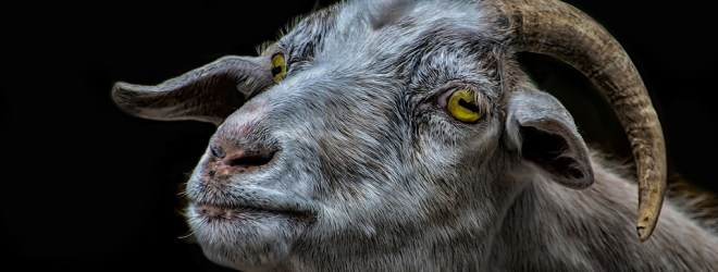 Never Trust a Goat with Yellow Eyes