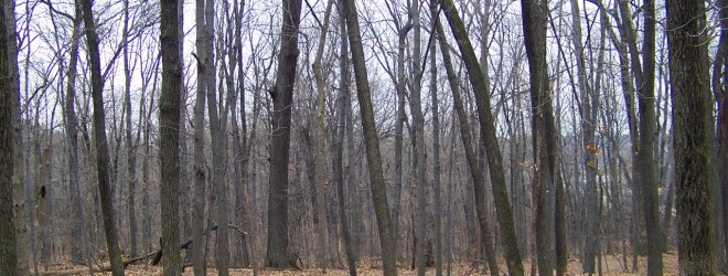 Wintertime Woods
