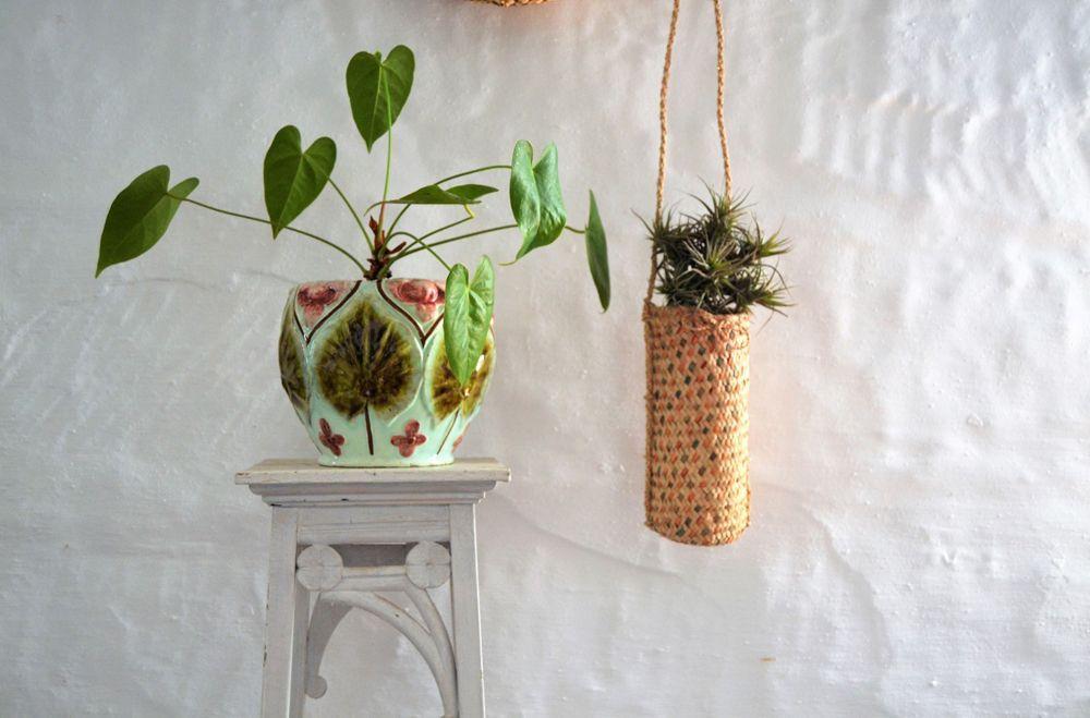 8 plantas ideales para dar luz a tu casa