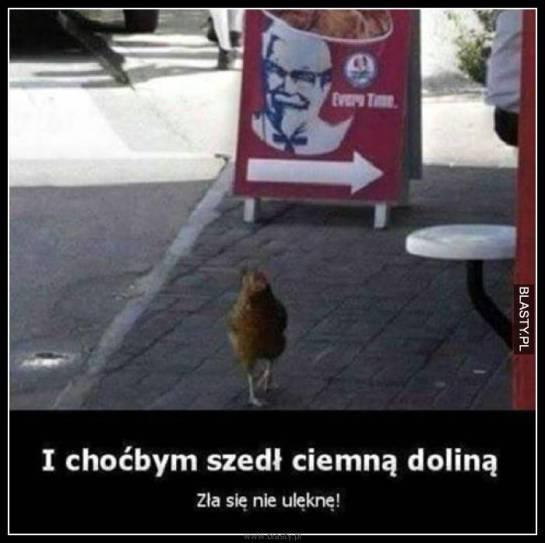 20+ memów - kurczaki kfc najlepsze śmieszne memy i demotywatory facebook -  kurczaki kfc