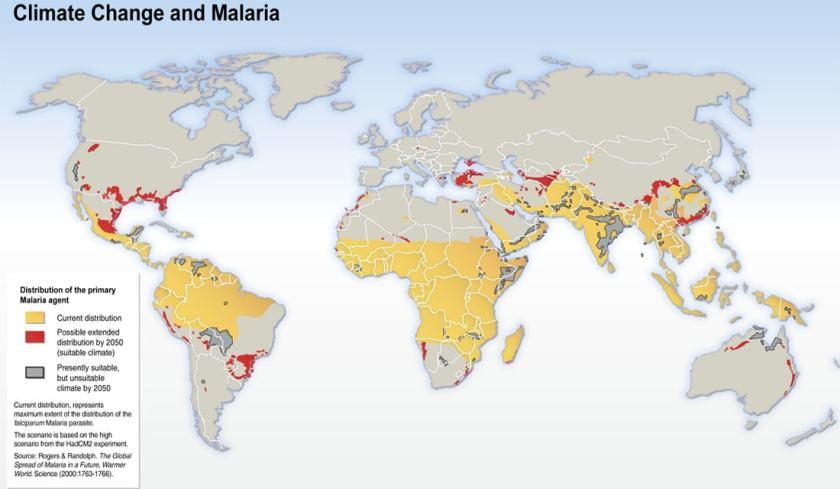malaria copy